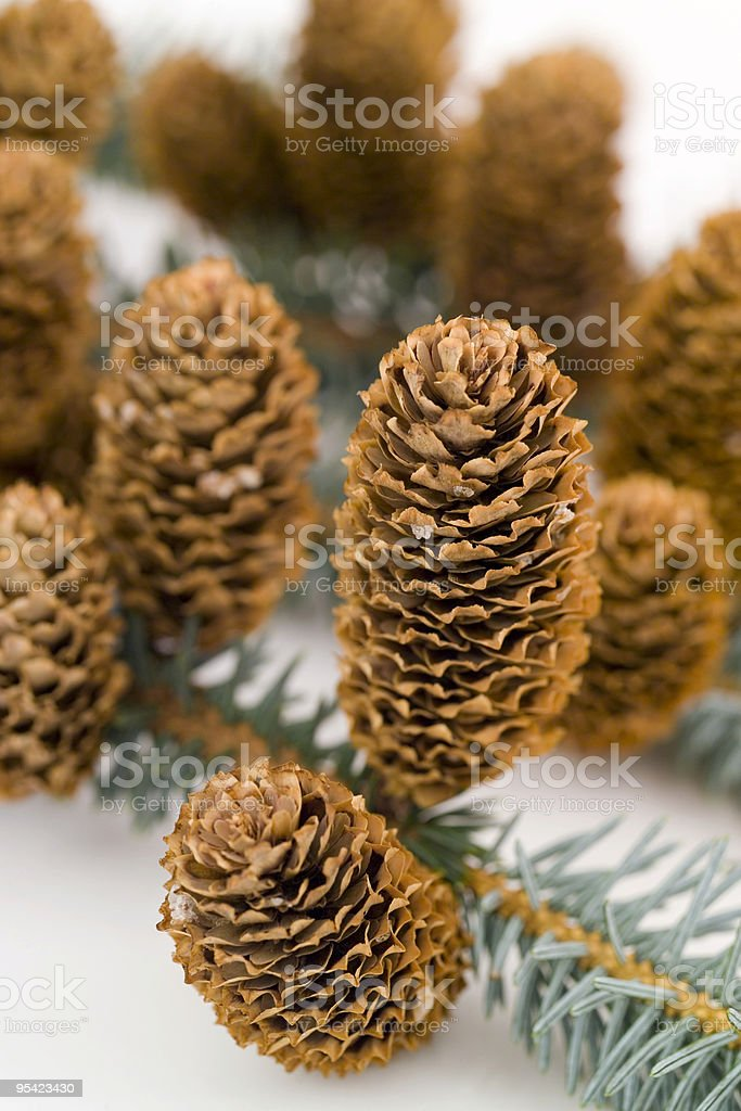 Pine cones on a branch royalty-free stock photo