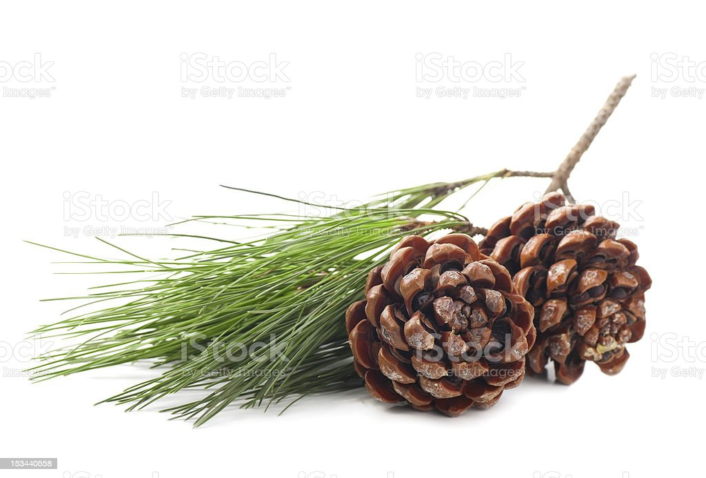 Pine cones on a white background stock photo