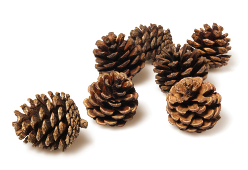 Pine cone pictures images and stock photos istock - Pliage serviette pomme de pin ...