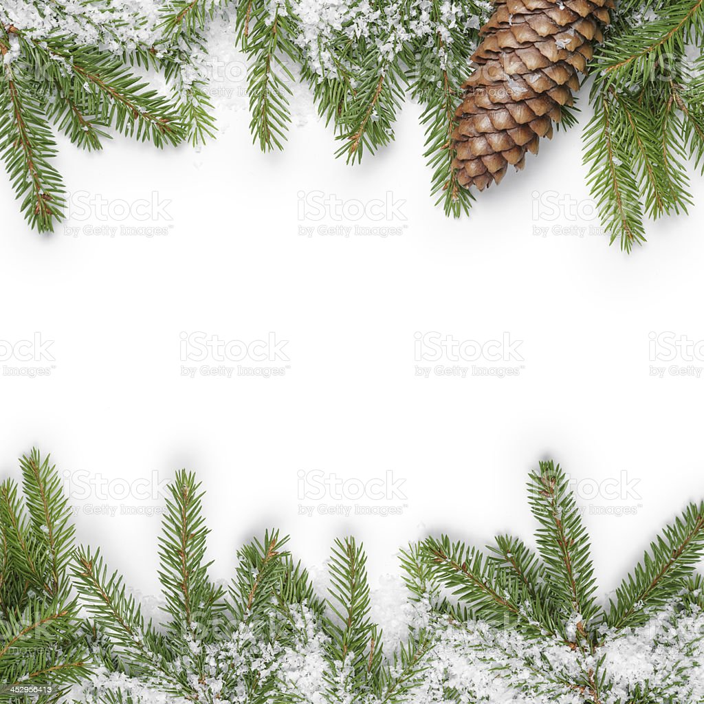 Pine fir branches in snow with pine cone stock photo