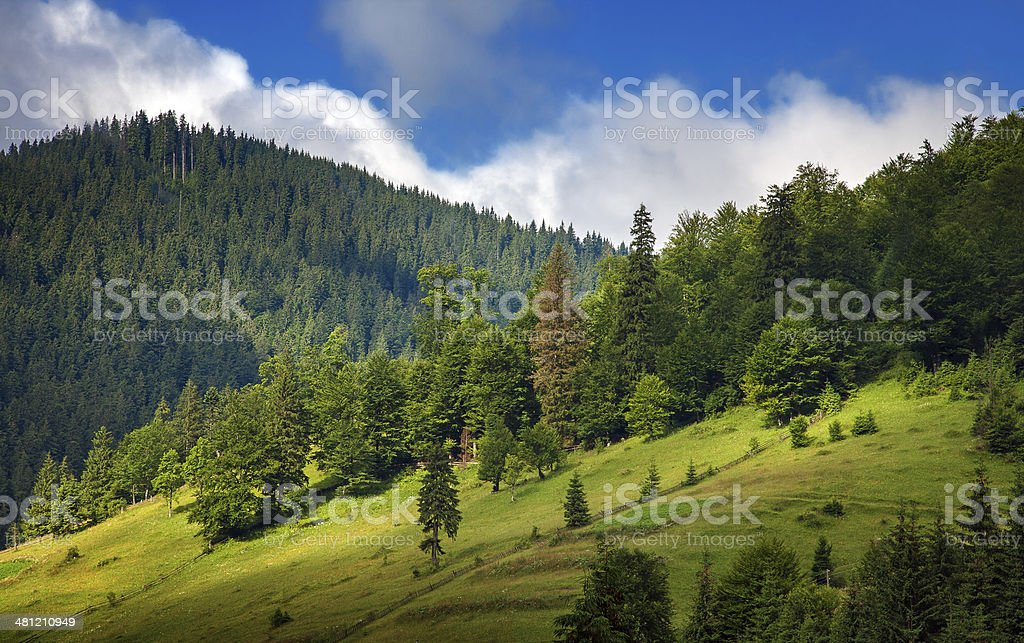 pine forest covered mountains royalty-free stock photo