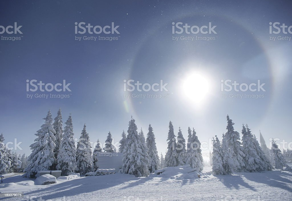 Pine forest in winter - horizontal royalty-free stock photo