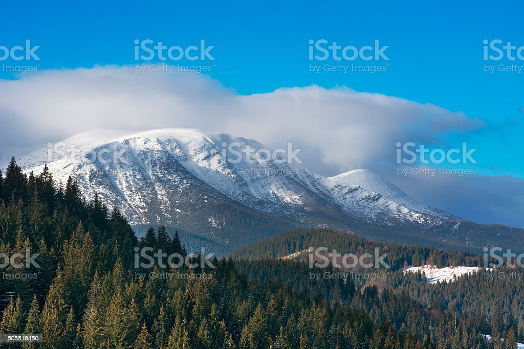Pine forest on background of winter mountains stock photo