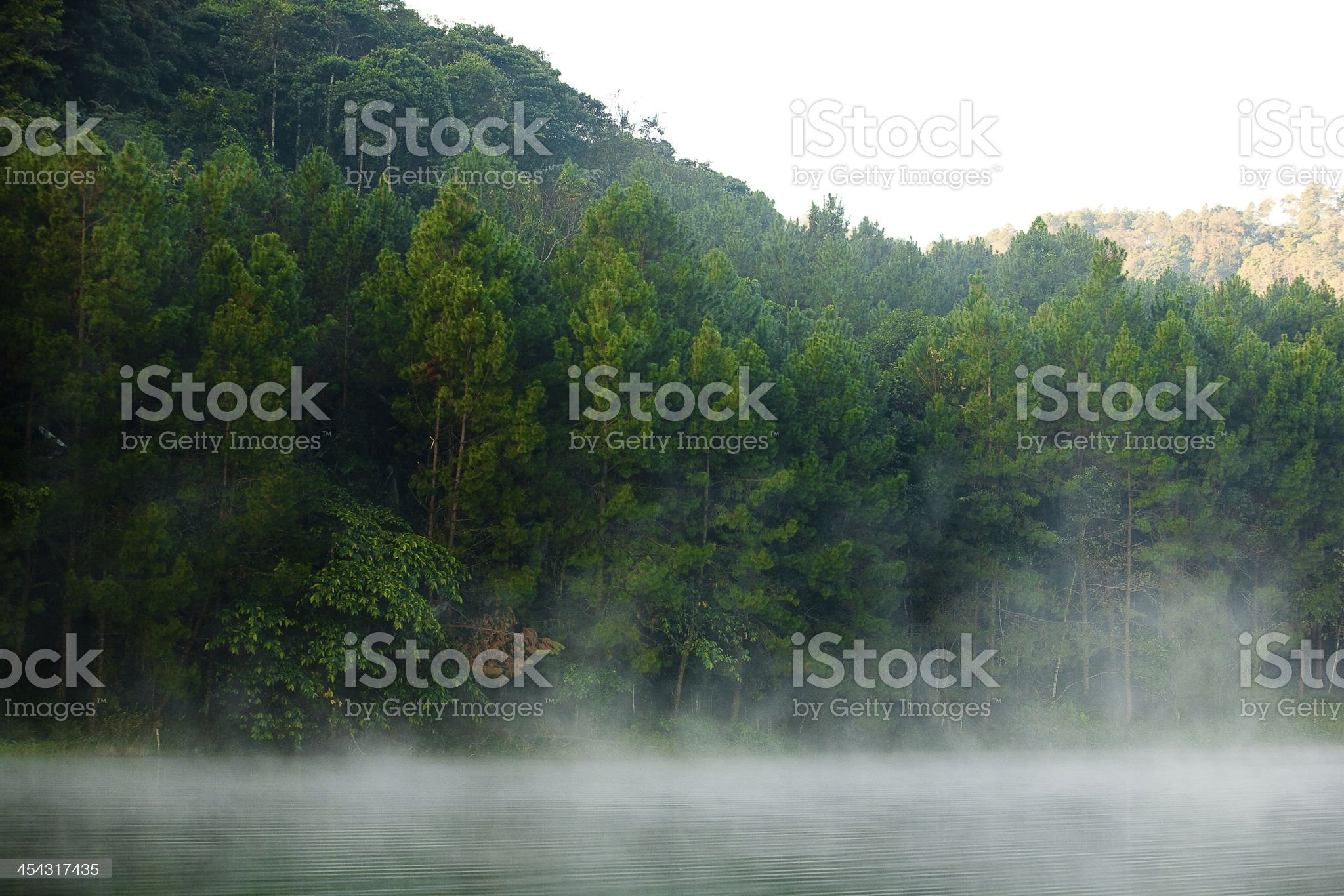 Pine Forest on lake royalty-free stock photo