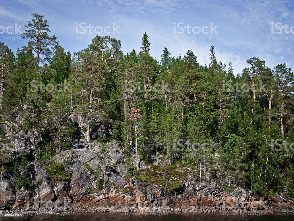 Pine forest on the rock in Karelia royalty-free stock photo