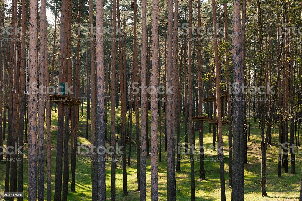 pine forest park stock photo