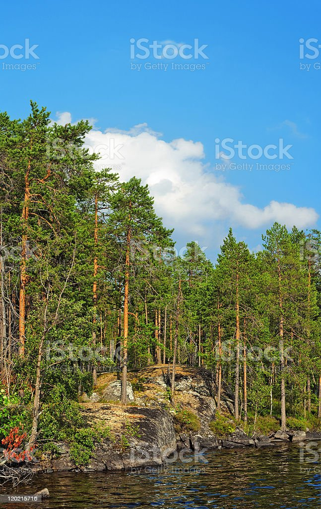 pine forest under blue sky near north lake royalty-free stock photo