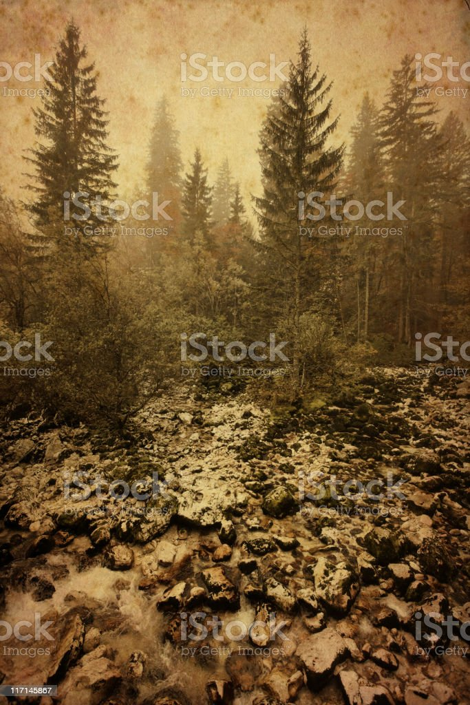 pine forest - vintage photo royalty-free stock photo