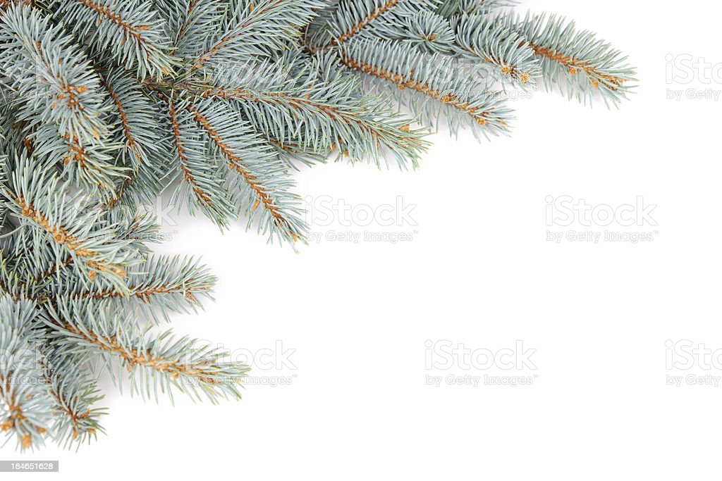 Pine Garland royalty-free stock photo