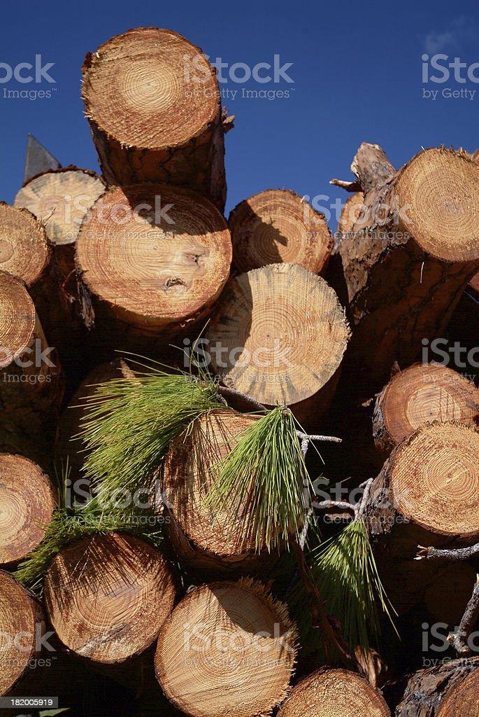 Pine logs 02 royalty-free stock photo