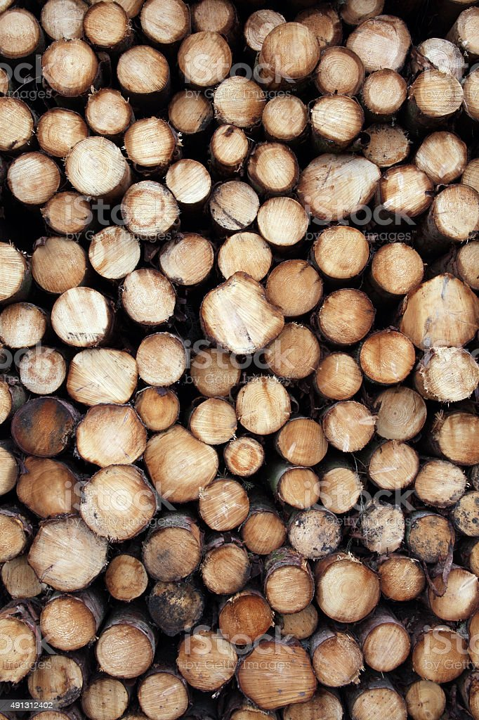 Pine logs background stock photo