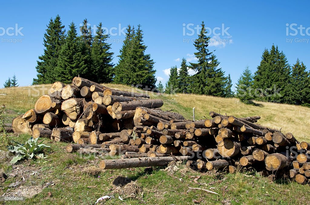 Pine logs in the mountains royalty-free stock photo