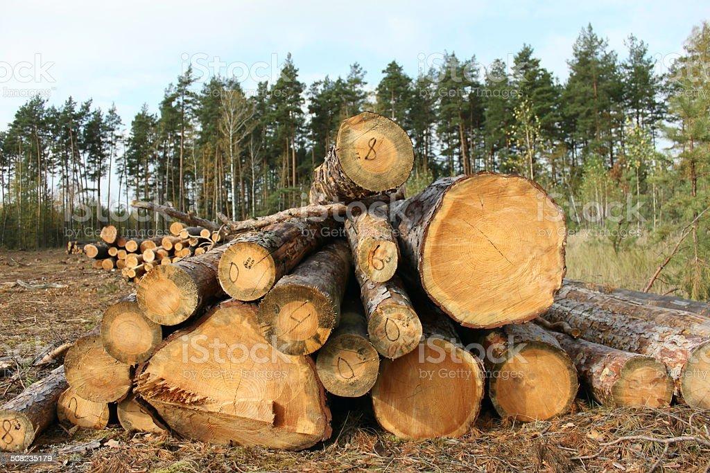 Pine logs stock photo