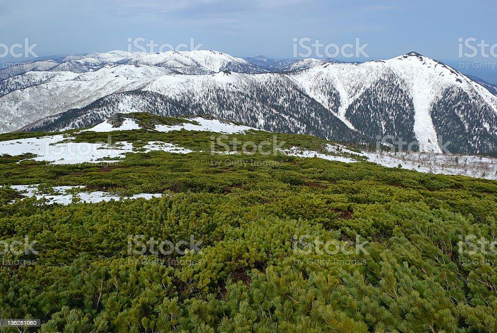 Pine mountains stock photo