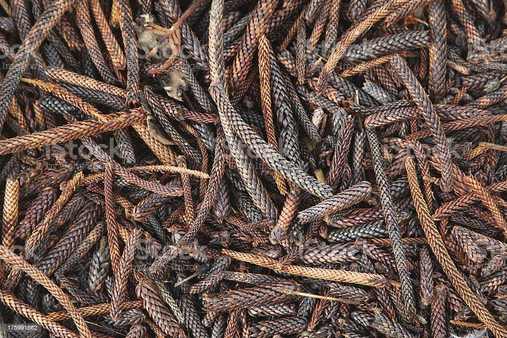 Pine needle background Pattern stock photo