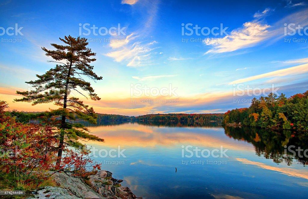 Pine On Rock stock photo