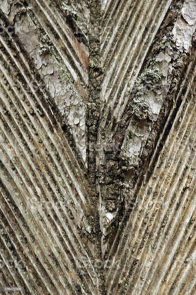 pine resin royalty-free stock photo