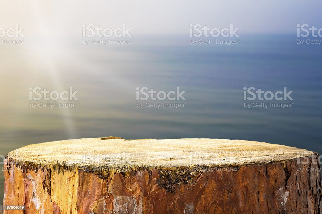 Pine stump background Baltic sea stock photo