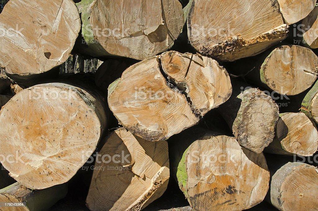 Pine timber stacked at lumber yard royalty-free stock photo