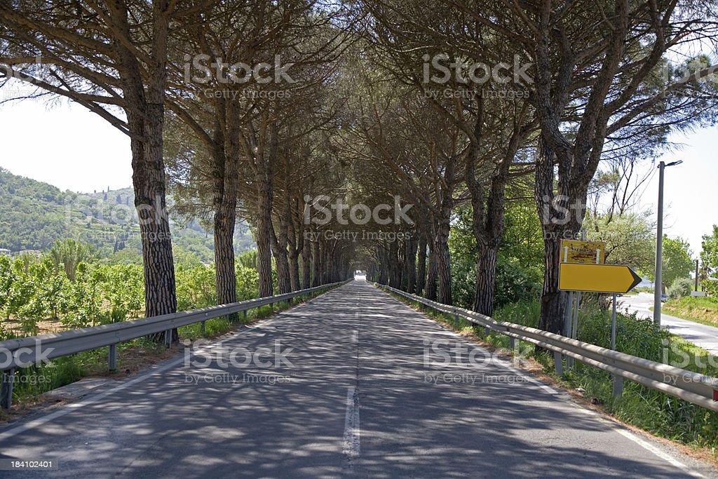 pine tree alley street avenue royalty-free stock photo
