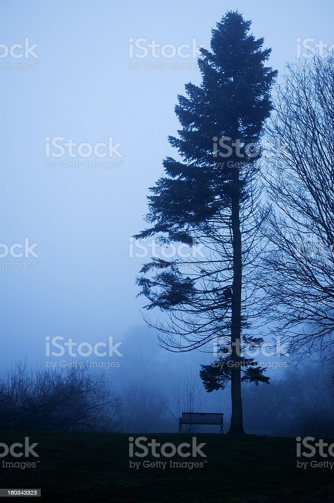 Pine tree and benck in foggy twilight. royalty-free stock photo