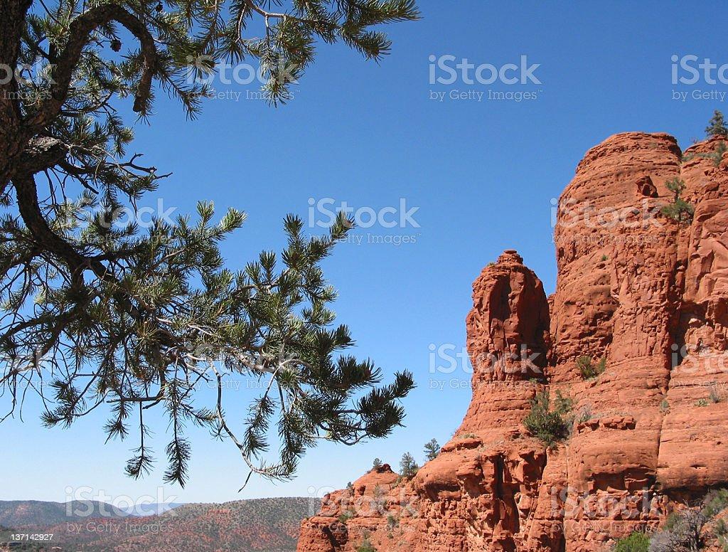 Pine Tree and Red Rocks, Sedona, Arizona stock photo