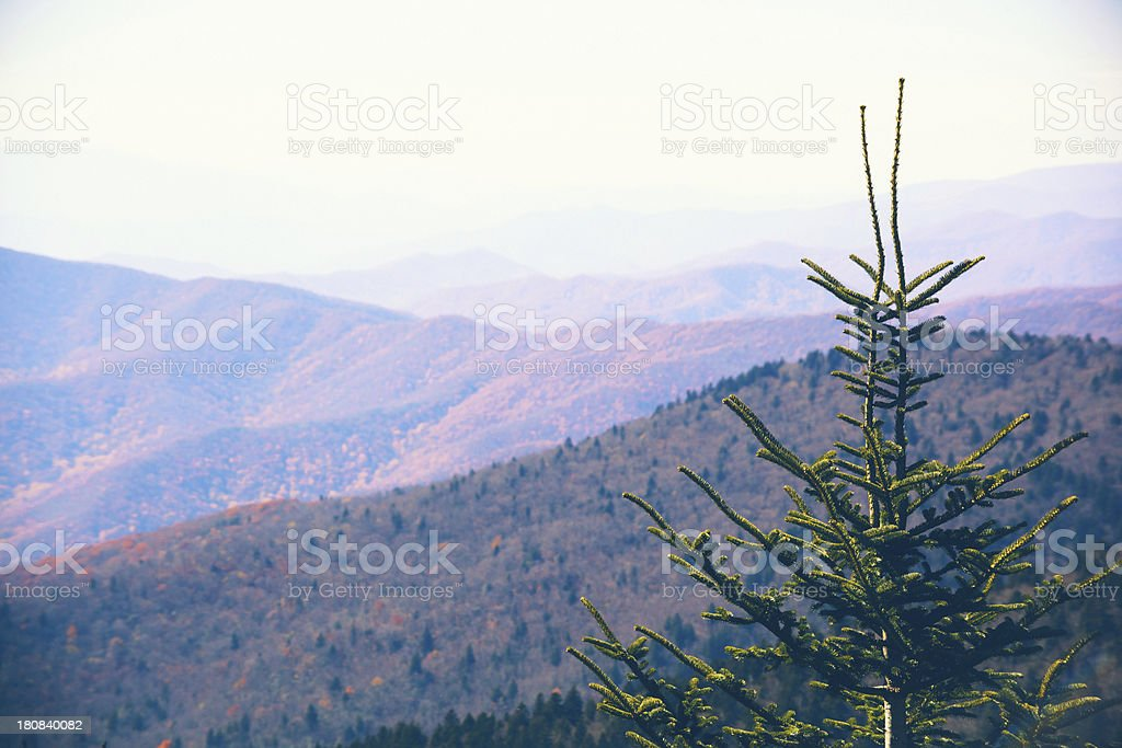 Pine Tree and the Mountains royalty-free stock photo