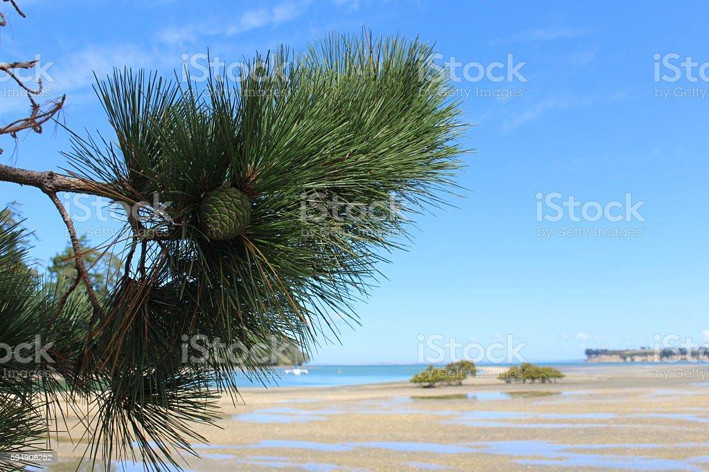 Pine tree at the estuary stock photo