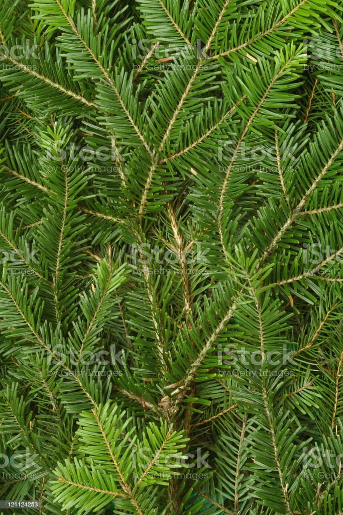 Pine Tree Background royalty-free stock photo