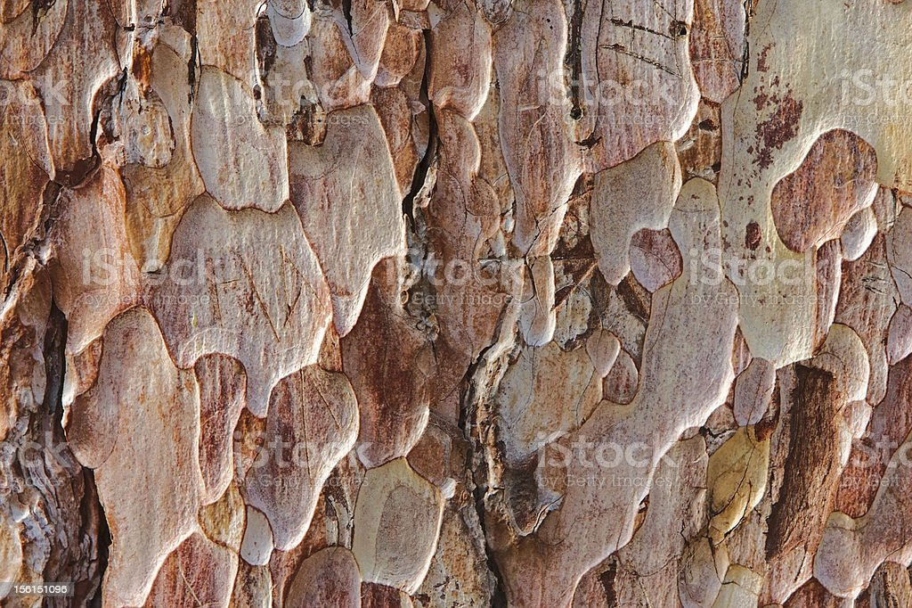 Pine tree bark background royalty-free stock photo