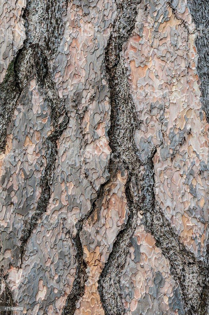 Pine tree bark full frame structure nature background stock photo