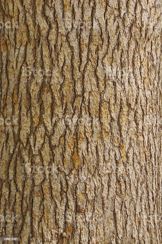 Pine tree bark texture stock photo