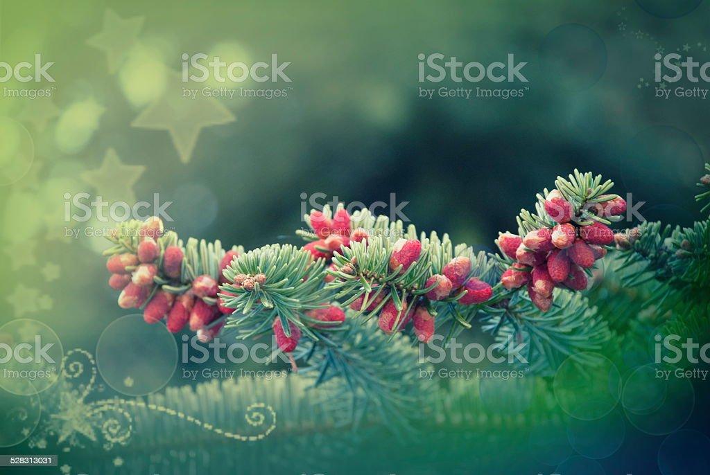 Pine tree brunch background stock photo