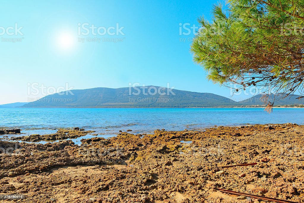 pine tree by the rocky shore in Mugoni beach stock photo