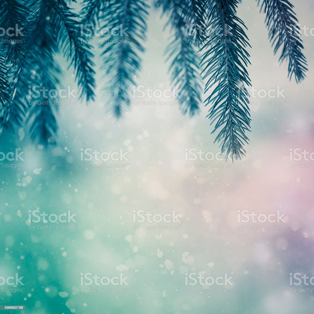 Pine tree close-up stock photo