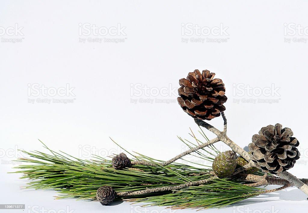 Pine tree composition stock photo