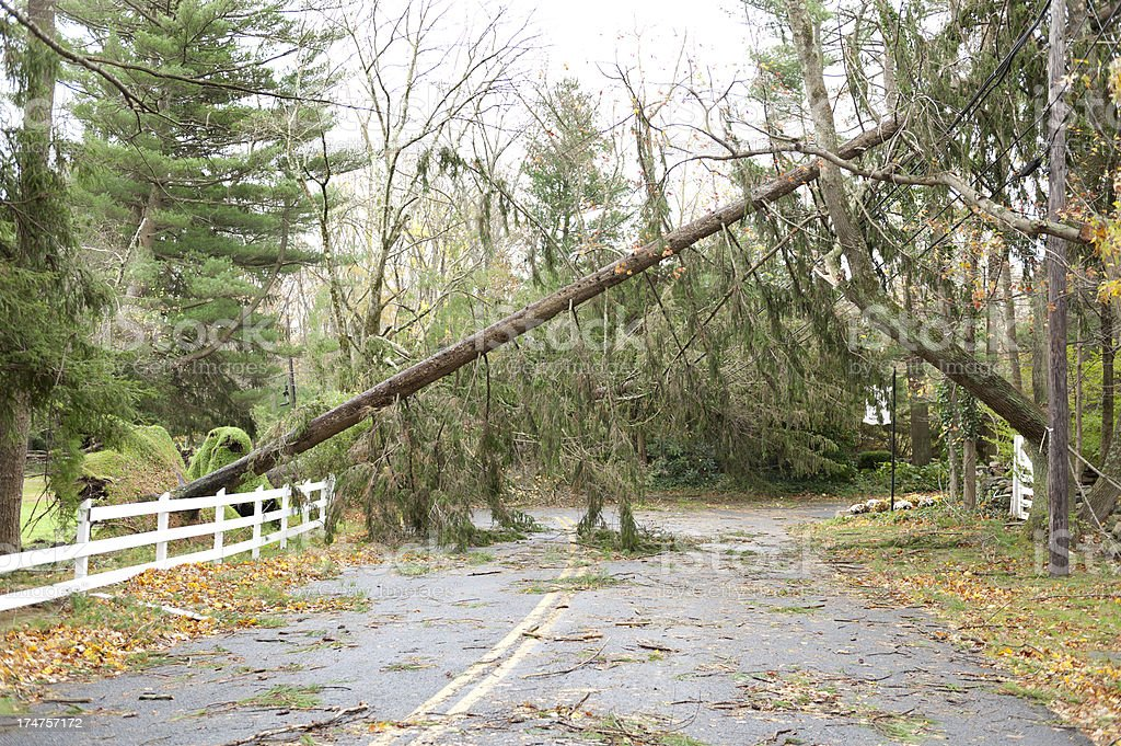 Pine tree fell across road during Hurricane Sandy stock photo