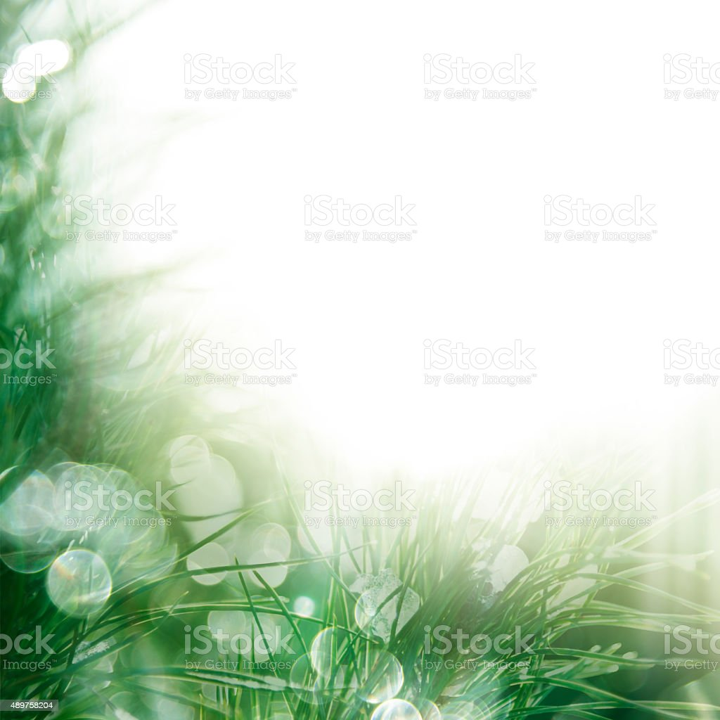 Pine tree frame in winter stock photo