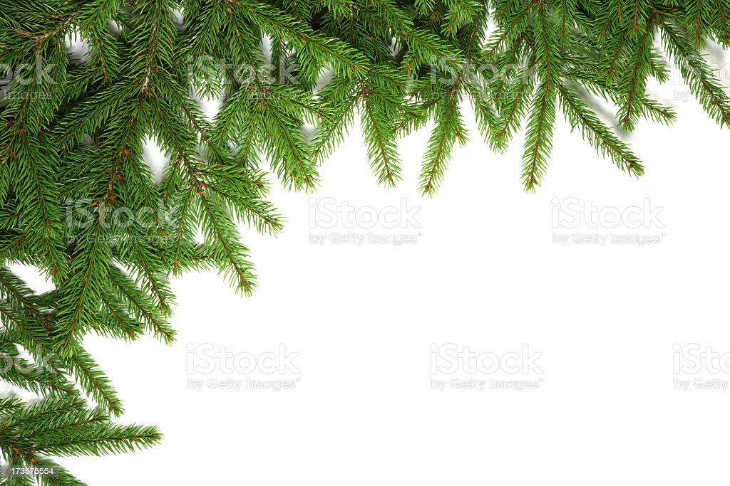 Pine tree frame on white background royalty-free stock photo