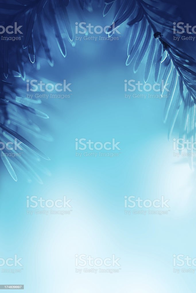 Pine tree framework stock photo