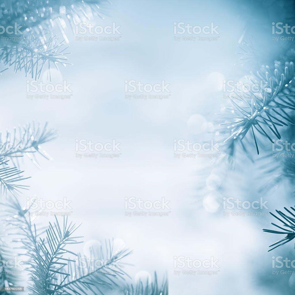Pine tree  framework royalty-free stock photo