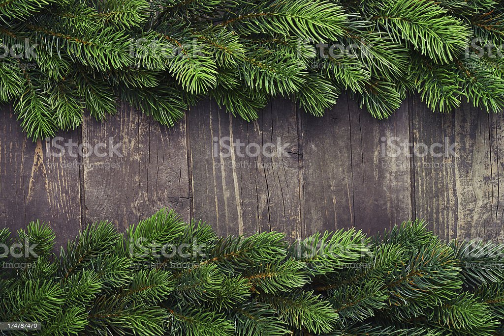 Pine tree on old wooden background royalty-free stock photo