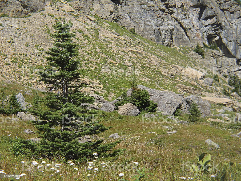 Pine Tree Scene royalty-free stock photo
