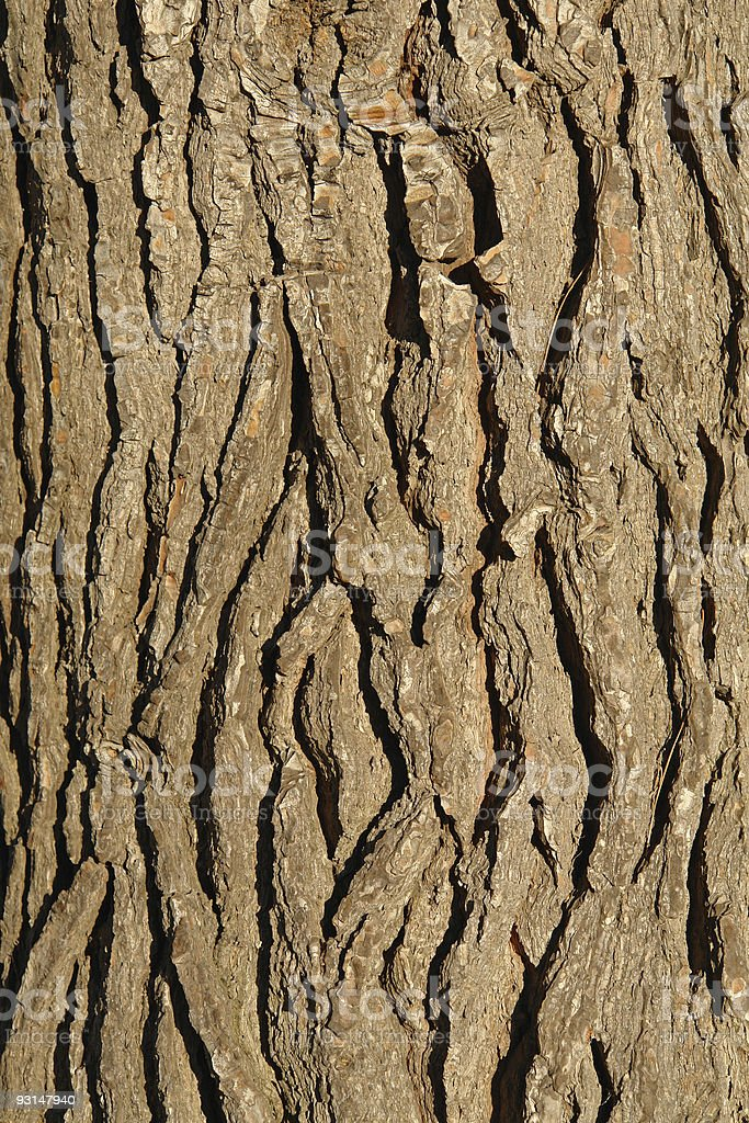 Pine tree structure royalty-free stock photo