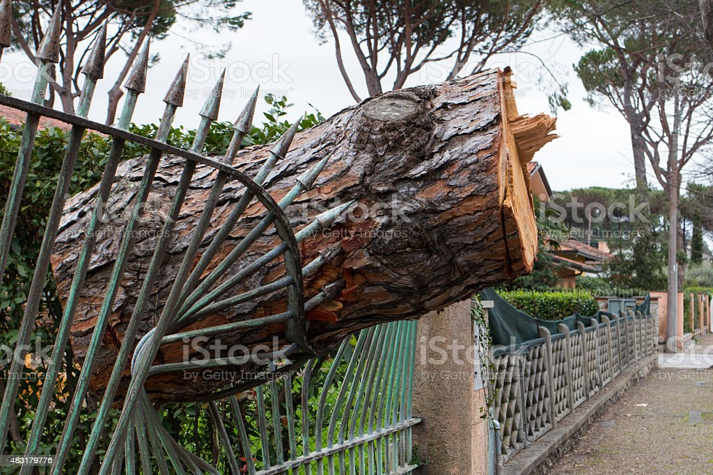 Pine tree trunk falled on a railing after windstorm stock photo
