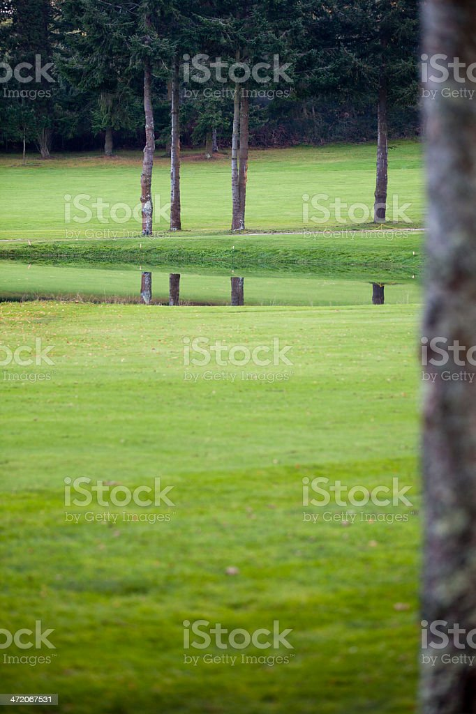 Pine tree trunks and reflections on green stock photo
