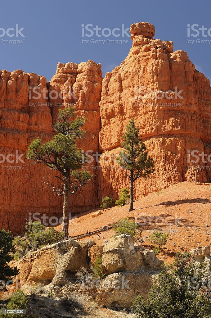 Pine trees among bright orange walls of Bryce Canyon royalty-free stock photo