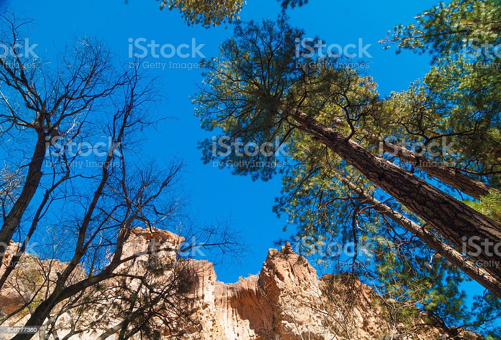 Pine Trees and Sandstone Cliffs stock photo