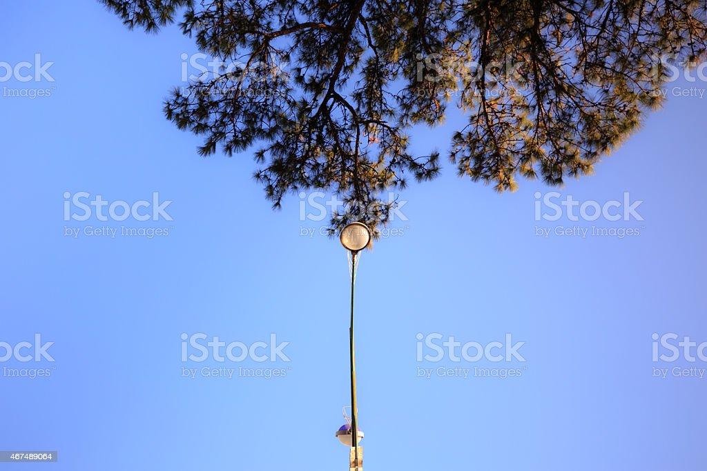 Pine trees and streetlights stock photo
