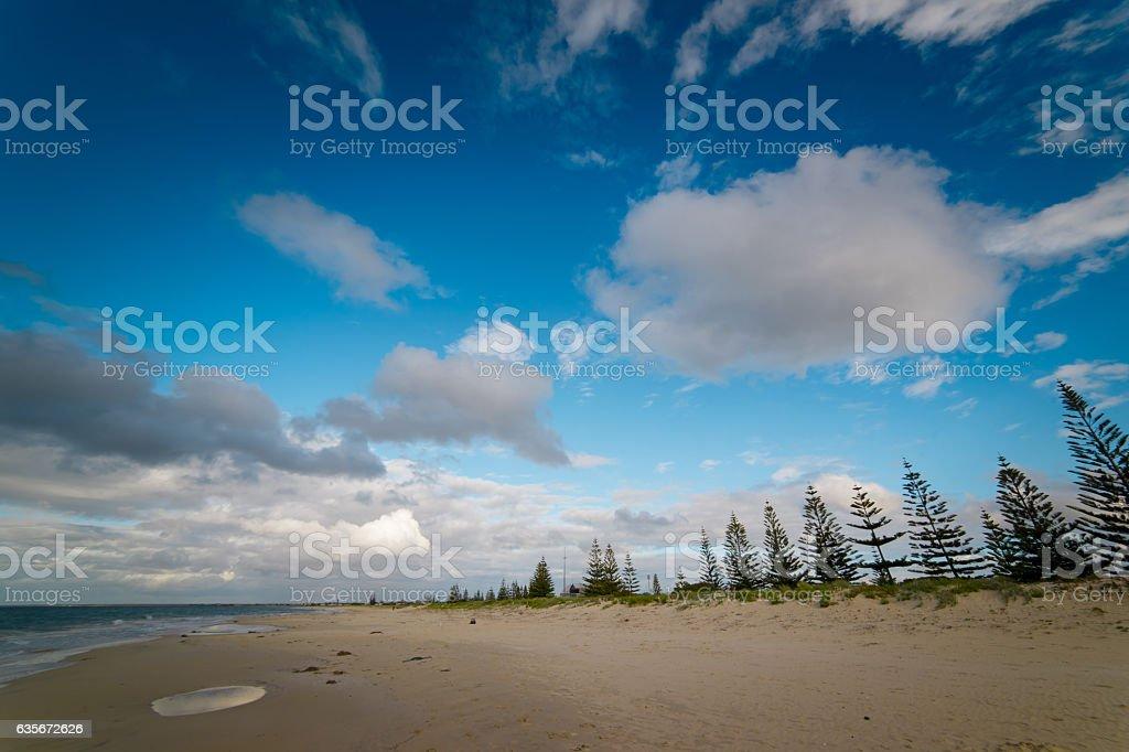 Pine trees at Busselton sandy white beach stock photo